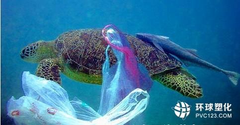 报告:大量海洋塑料垃圾下落不明