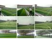 天津人造草坪球场铺设_各种款式人造草坪